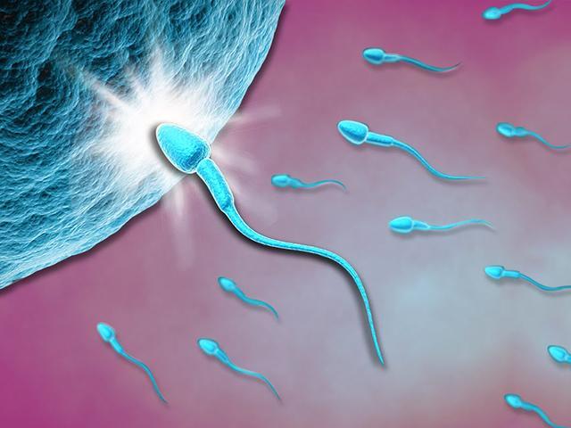 Các giai đoạn của quá trình thụ thai và phát triển thai nhi