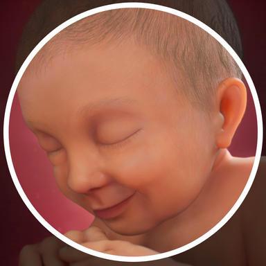Thai nhi 37 tuần - Não và phổi của bé phát triển nhanh hơn