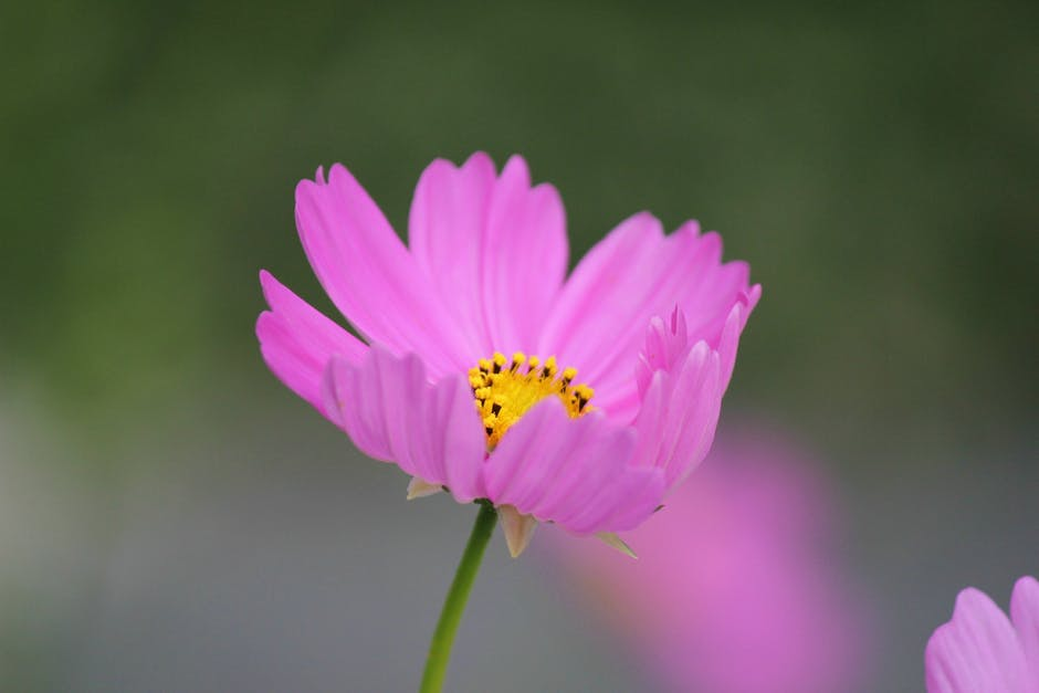50 Hình Ảnh Những Bông Hoa Đẹp Nhất Thế Giới Có Kích Thước Lớn