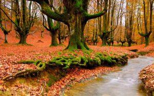 Hình nền mùa thu đẹp được giới trẻ yêu thích nhất hiện nay