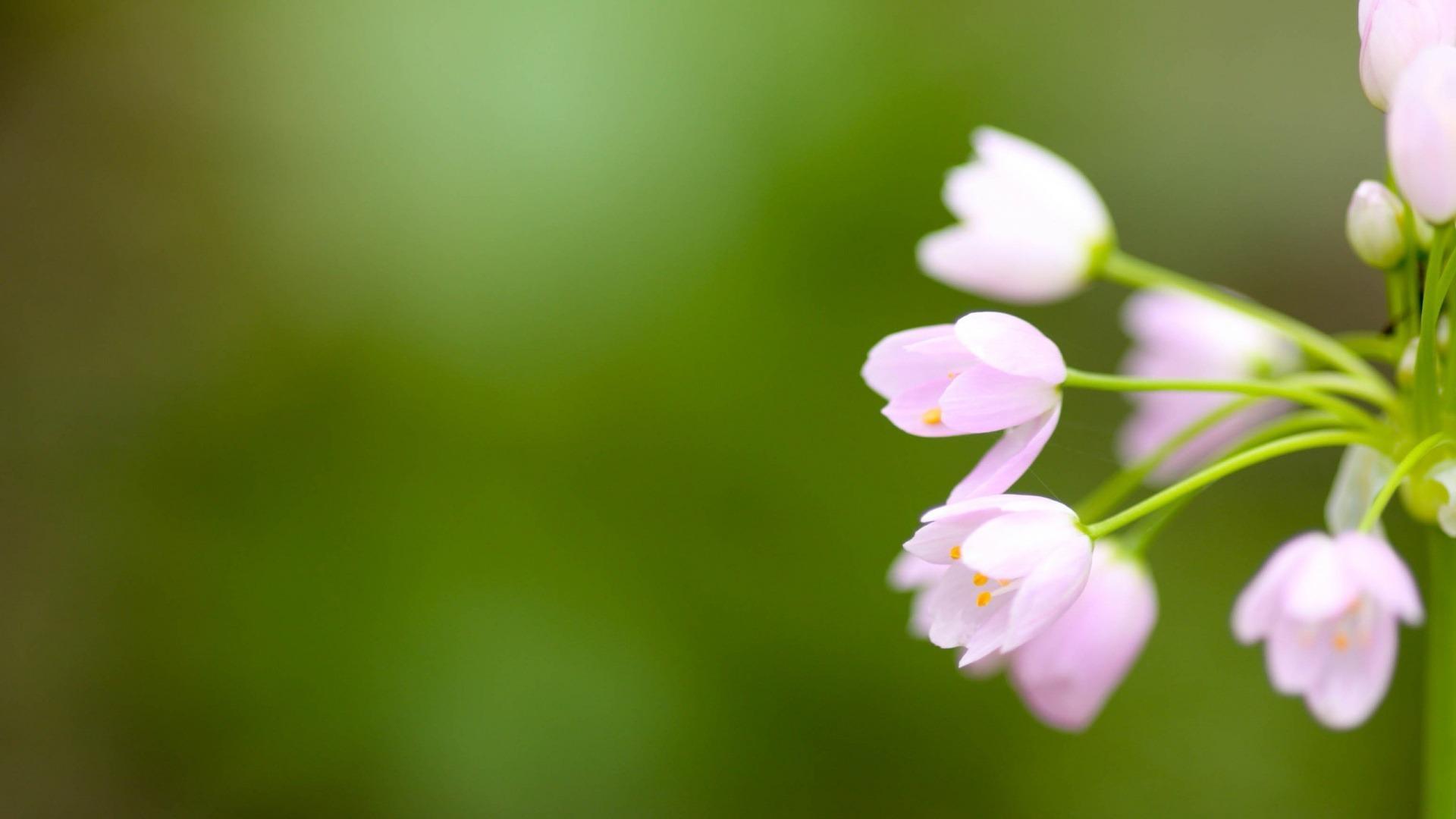 [HOT] Tải hình ảnh hoa đẹp làm hình nền máy tính ấn tượng nhất