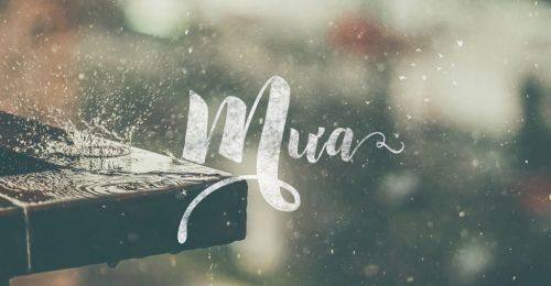 [Tuyển chọn] Những câu nói hay về mưa gợi biết bao nỗi niềm