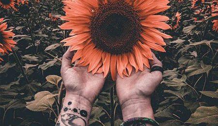 [Hơn 1001+] Stt về hoa hướng dương ý nghĩa nhất mọi thời đại